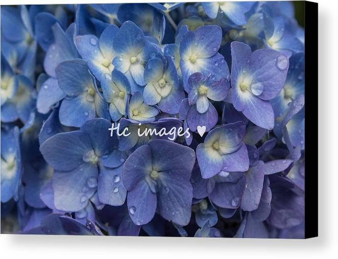 Floral Canvas Print featuring the photograph Showered Hydrangeas by Toni Lynn Cardoza