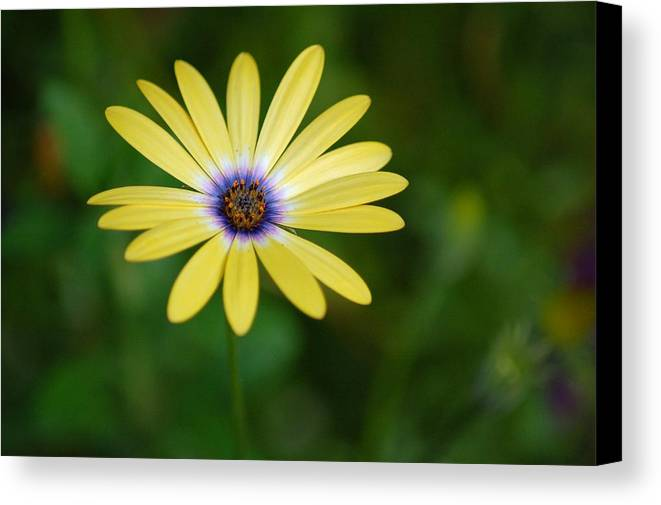 Flower Canvas Print featuring the photograph Simple Flower by Jennifer Englehardt