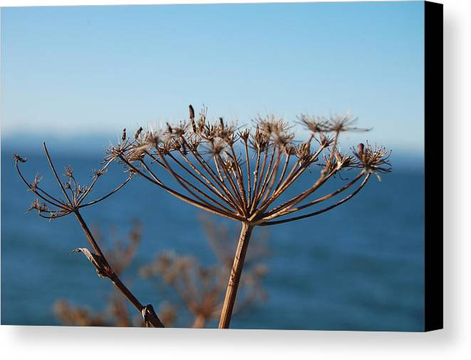 Dry Canvas Print featuring the photograph Simple Nature by Jean Booth