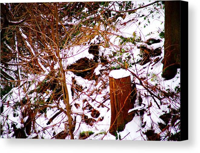Winter Canvas Print featuring the photograph Snow And Tree Trunk by Paul Kloschinsky