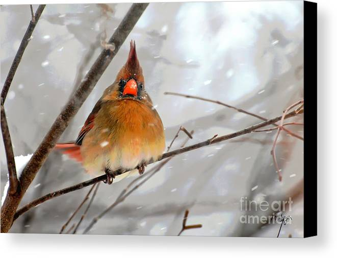 Bird Canvas Print featuring the photograph Snow Surprise by Lois Bryan