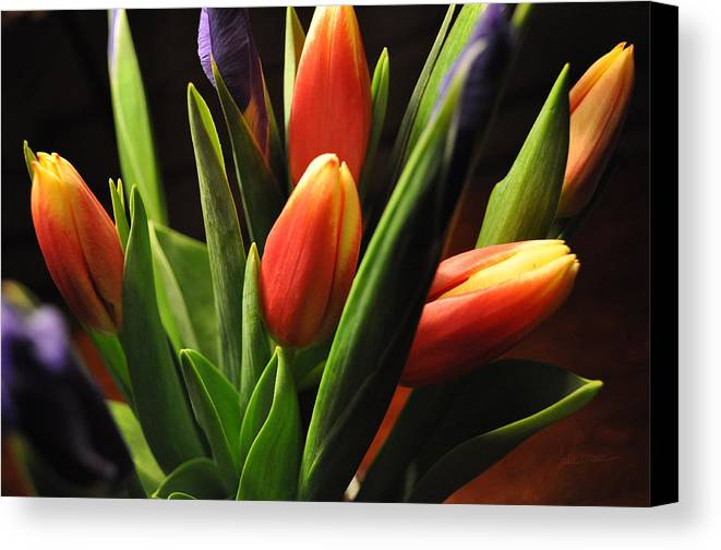 Flowers Canvas Print featuring the photograph Soft Fireworks by Luke Moore