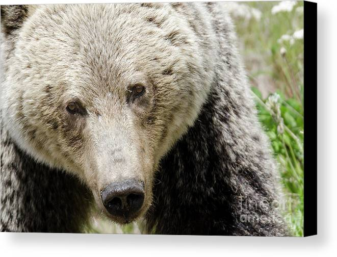 Grizzly Canvas Print featuring the photograph Soulful by Dee Cresswell