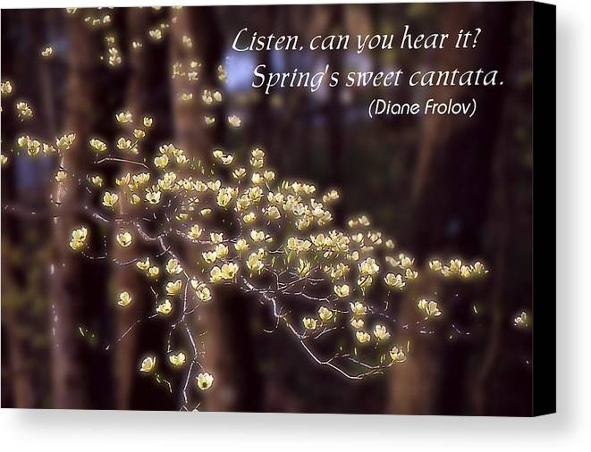 Spring Canvas Print featuring the photograph Spring Blossoms Poster by Roger Soule