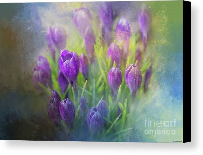 Crocus Canvas Print featuring the photograph Spring Delight by Eva Lechner