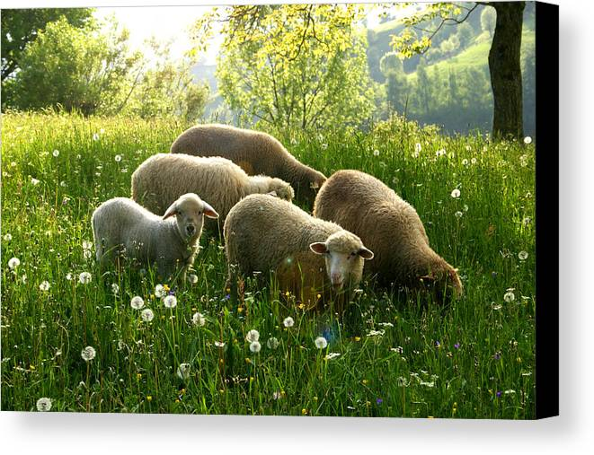 Abundance Canvas Print featuring the photograph Spring In The Mountains by Emanuel Tanjala