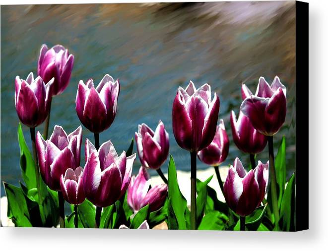 Tulip Canvas Print featuring the photograph Spring Tulips 1 by Jim Darnall
