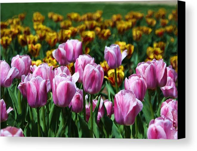 Tulips Canvas Print featuring the photograph Spring Tulips 2 by Jim Darnall