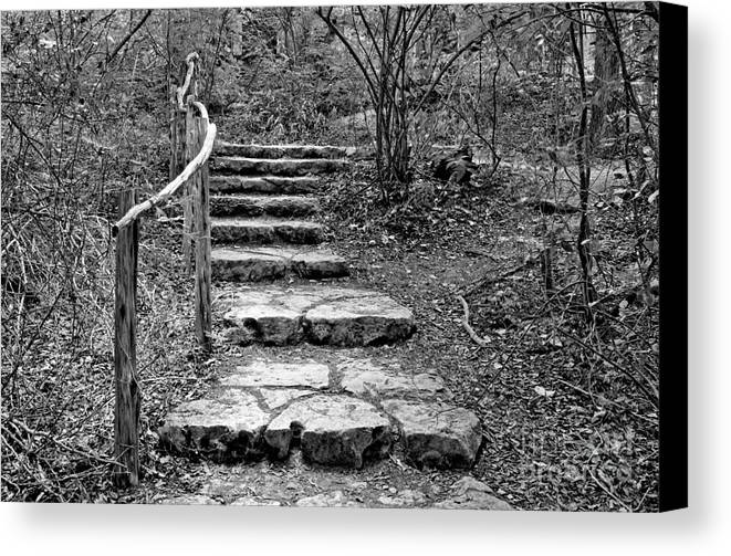 Nature Canvas Print featuring the photograph Stairway To Nature by Gary Richards