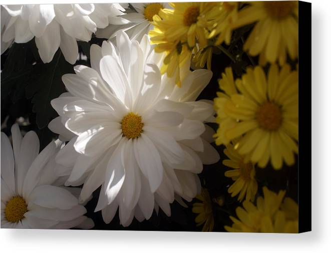Flower Canvas Print featuring the photograph Standing Out In A Crowd by Kat Dee