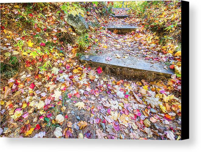 Fall Canvas Print featuring the photograph Step Into Fall by David Pratt