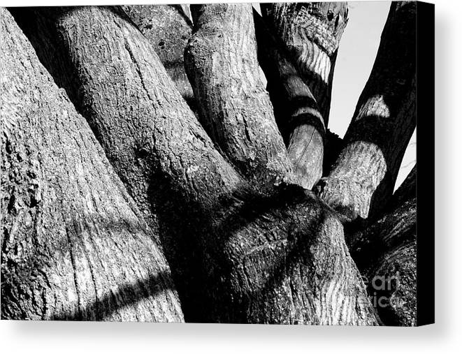 Tree Structure Canvas Print featuring the photograph Structure by Steven Macanka