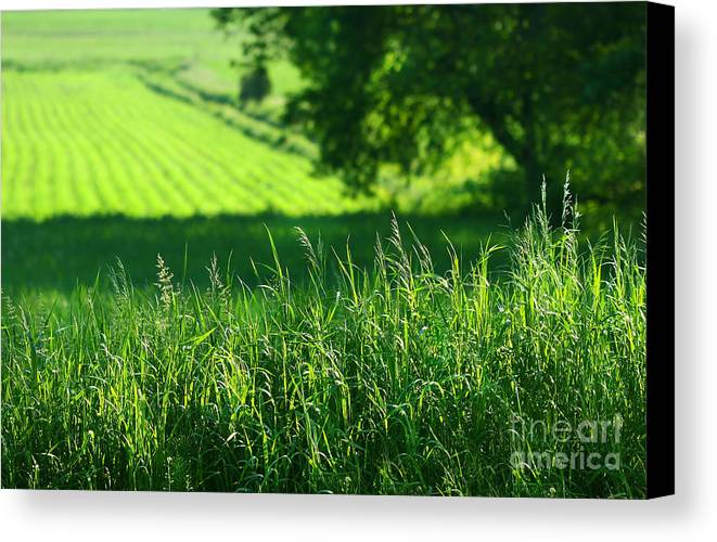 Agricultural Canvas Print featuring the digital art Summer Fields Of Green by Sandra Cunningham