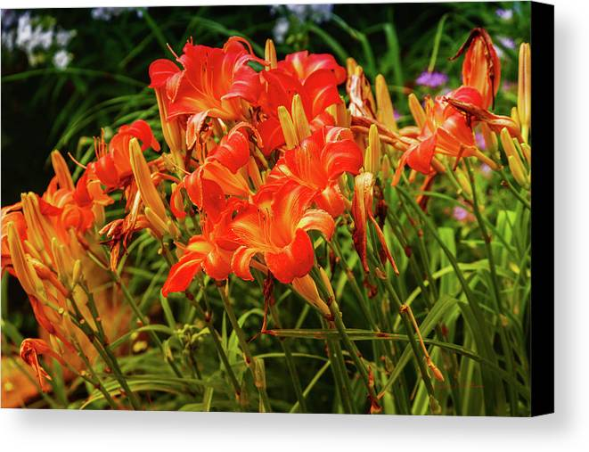 Heron Heaven Canvas Print featuring the photograph Summer Flowers by Edward Peterson