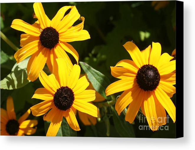 Summer Canvas Print featuring the photograph Summer Glow by Amy Holmes