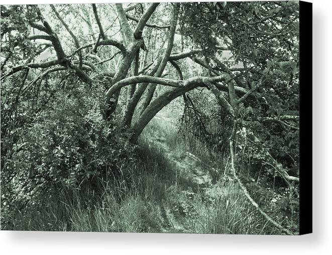 Path Canvas Print featuring the photograph Summer Path by Barbara White