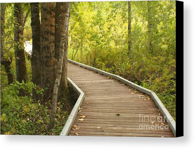 Trail Canvas Print featuring the photograph Summer Walk by Idaho Scenic Images Linda Lantzy