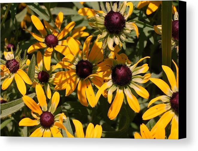 Flower Canvas Print featuring the photograph Sun And Shade by Jame Hayes