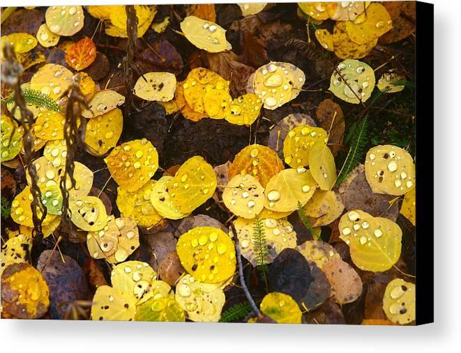Rain Canvas Print featuring the photograph Sun Shine Drops by Laura Ragland