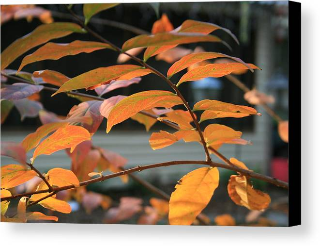 Fall Canvas Print featuring the photograph Sun Shing Through by Linda Ebarb