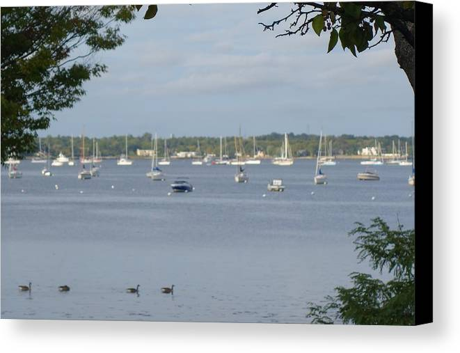 Ducks Canvas Print featuring the photograph Sunday Morning Swim On Manhasset Bay In Port Washington, Ny by Rauno Joks
