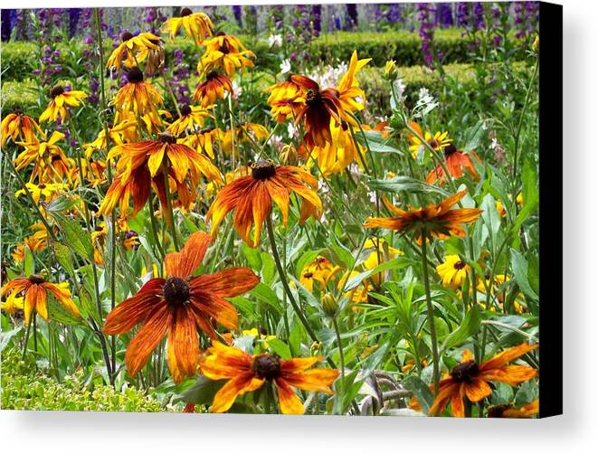 Sunflowers Canvas Print featuring the photograph Sunflowers And Friends by Jean Booth