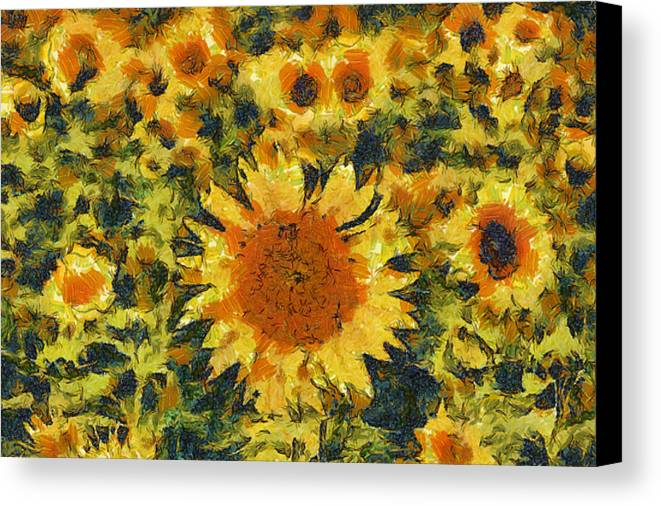 Sun Canvas Print featuring the photograph Sunflowers by Shubhadip Ghosh