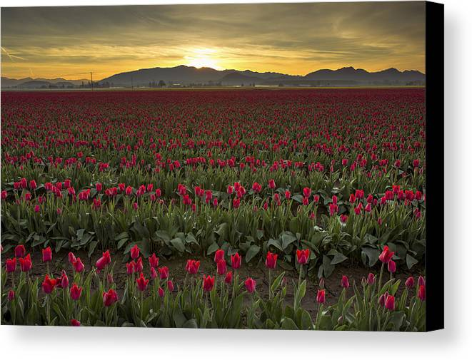 Sunrise Canvas Print featuring the photograph Sunrise In Skagit Valley by Bob Stevens