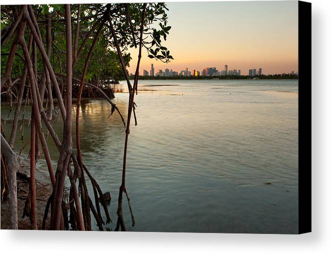 Miami Canvas Print featuring the photograph Sunset At Miami Behind Wild Mangrove Forest by Matt Tilghman