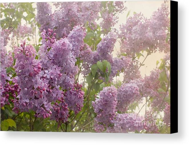 Lilacs Canvas Print featuring the photograph Swimming In A Sea Of Lilacs by Cindy Garber Iverson
