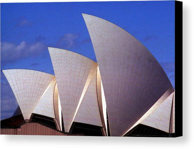 Australia Canvas Print featuring the photograph Sydney Harbor Fins by Robert M Brown II