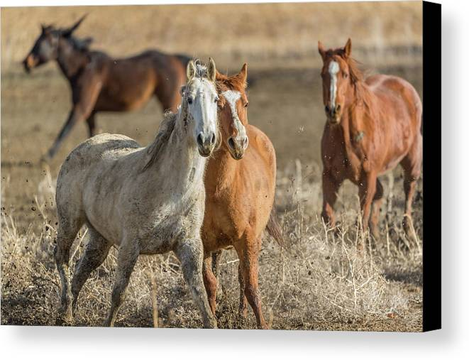 Horse Canvas Print featuring the photograph Tag, You're It by David F Hunter