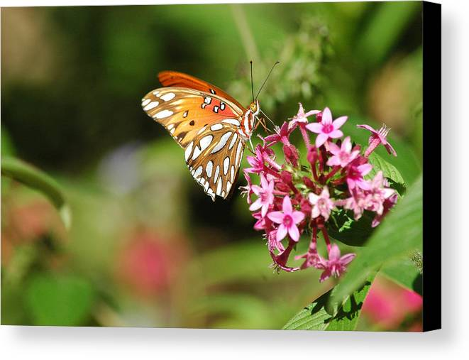 Butterflies Canvas Print featuring the photograph Tasty Visit by Robert Anschutz