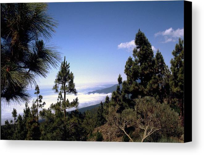 Tenerife Canvas Print featuring the photograph Tenerife by Flavia Westerwelle