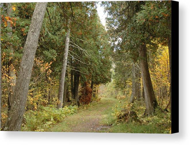 Landscape Canvas Print featuring the photograph Tettegouche State Park by Kathy Schumann