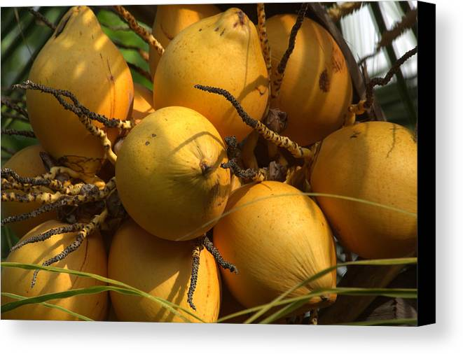 King Coconuts Canvas Print featuring the photograph Thambili by Andrew Wijesuriya