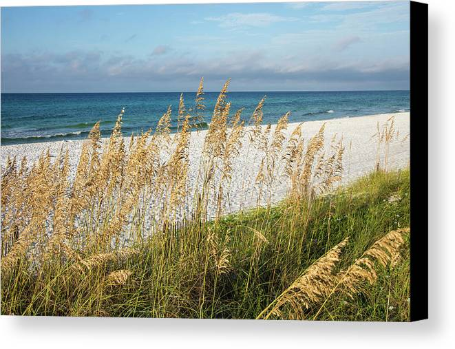 Beach Canvas Print featuring the photograph The Beach by Cliff Middlebrook