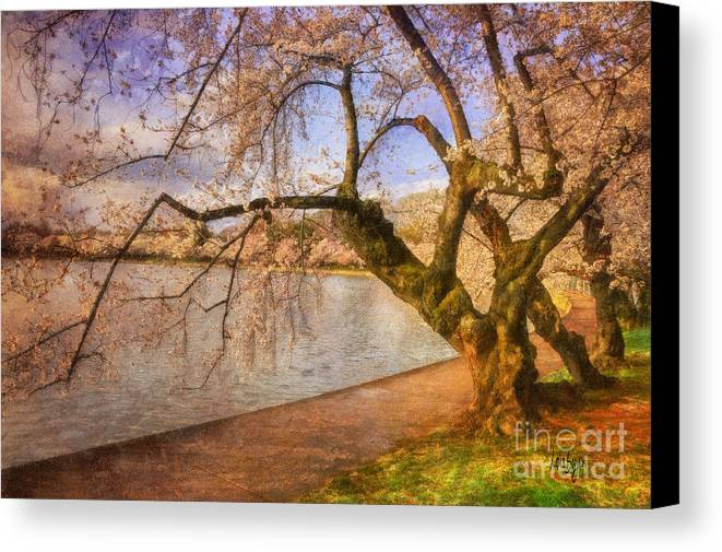 Trees Canvas Print featuring the photograph The Cherry Blossom Festival by Lois Bryan