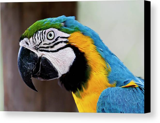 Macaw Canvas Print featuring the photograph The Happy Macaw by Craig Tata