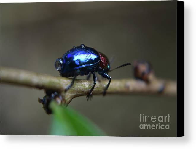 Michelle Meenawong Canvas Print featuring the photograph The Little Bug In The Rain by Michelle Meenawong