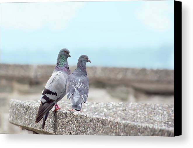 Bird Canvas Print featuring the photograph The Mr And Mrs by Judy Tomlinson