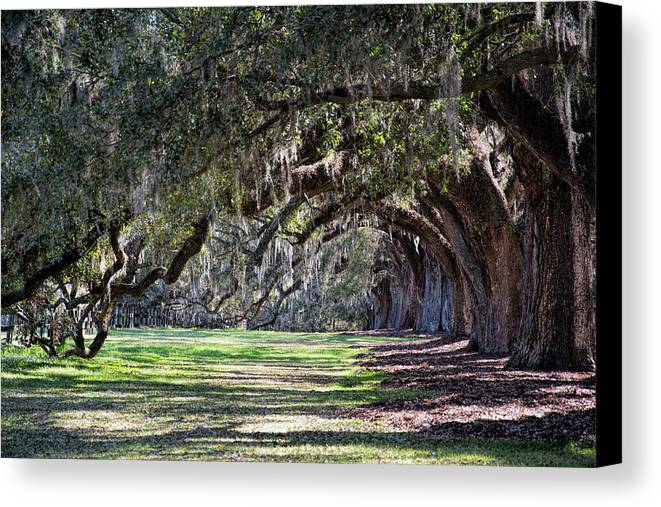 Live Oaks Canvas Print featuring the photograph The Oaks At Boone Hall by Ed Waldrop