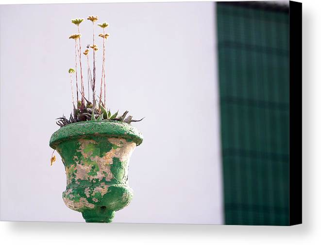 Photographer Canvas Print featuring the photograph The Pot by Jez C Self