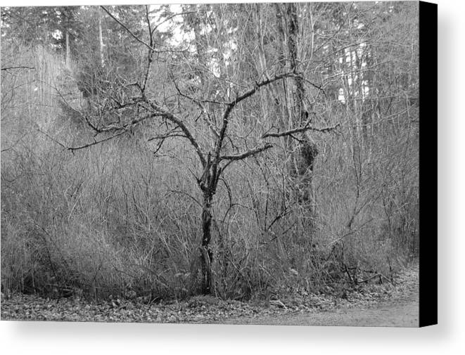 Black Canvas Print featuring the photograph The Scary Little Tree by J D Banks