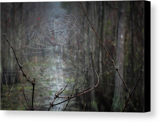 Spider Web Canvas Print featuring the photograph The Web by Chad Talton
