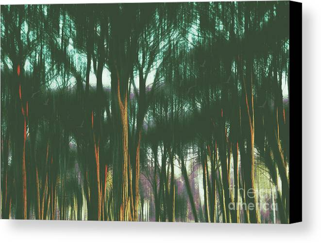 Woods Canvas Print featuring the photograph The Woods by Karen Black