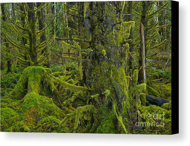 Canvas Print featuring the photograph Thick Rainforest by Adam Jewell