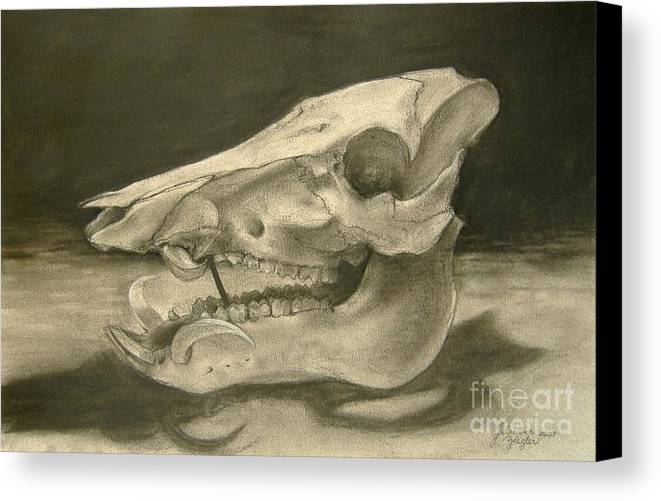 Pig Skull Canvas Print featuring the drawing This Little Piggy by Julianna Ziegler