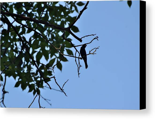 Bird Canvas Print featuring the photograph Todays Art 1241 by Lawrence Hess