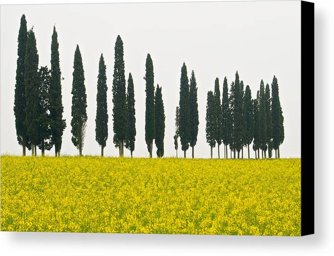 Landscape Canvas Print featuring the photograph Toscana Cypresses by Igor Voljch